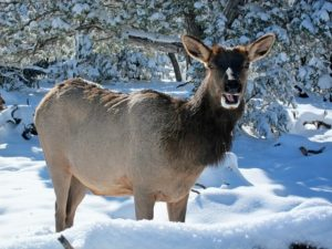 Wildlife enjoys the snowy winter weather at the Grand Canyon!